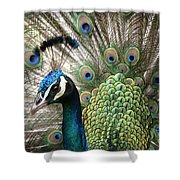 Indian Blue Peacock Puohokamoa Shower Curtain