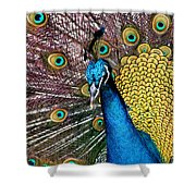 Indian Blue Peacock Shower Curtain
