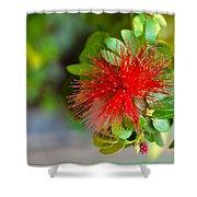 Indian Bottlebrush Flower Shower Curtain