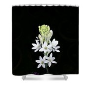 Indian Lily Shower Curtain