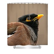 Indian Miner-2 Shower Curtain