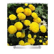 Indian Mums - Yellow Chaamanthi Shower Curtain