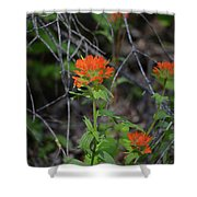 Indian Paint Brush 2 Shower Curtain