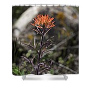 Indian Paintbrush 7 Shower Curtain