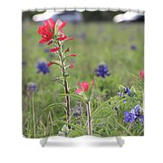 Indian Paintbrush Flower Shower Curtain