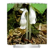 Indian Pipes - Monotropa Uniflora Shower Curtain