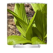 Indian Poke -veratrum Veride- Shower Curtain