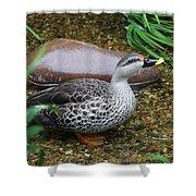 Indian Spot-billed Duck Shower Curtain