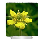 Indian Strawberry Flower Shower Curtain