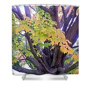 Indian Tree Shower Curtain