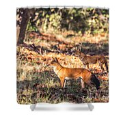 Indian Wild Dogs Dholes Kanha National Park India Shower Curtain