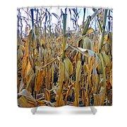 Indiana Corn 1 Shower Curtain