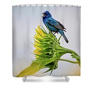 Indigo Bunting Sunflower Shower Curtain