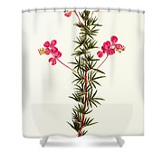 Indigo Plant Shower Curtain