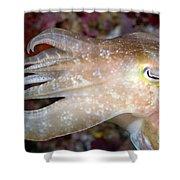 Indonesia, Cuttlefish Shower Curtain