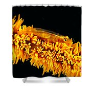 Indonesia, Goby Shower Curtain
