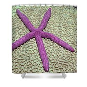 Indonesia, Pink Sea Star Shower Curtain