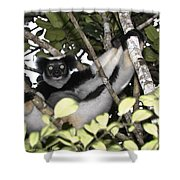 Indri Indri Shower Curtain