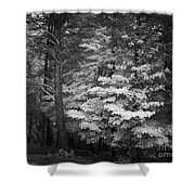 Infared Photograph Shower Curtain