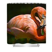Infinity Pink Flamingo Shower Curtain