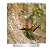 Inflight Feeding Bee Eater Shower Curtain