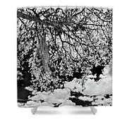 Infrared Indian River State College Hendry Campus #8 Shower Curtain