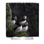 Ingolfshofthi Puffins Iceland 2855 Shower Curtain