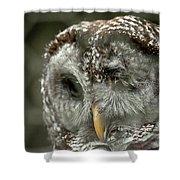 Injured Owl Shower Curtain