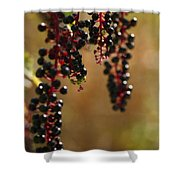 Inkberry Shower Curtain