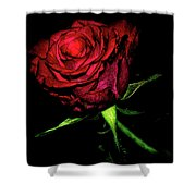 Inked Rose Shower Curtain