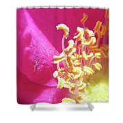 Inner Rugosa Shower Curtain