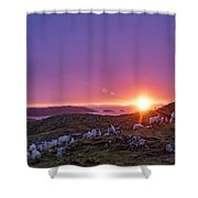 Inquisitive Flock At Dawn, Harris Shower Curtain
