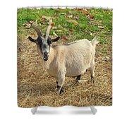 Inquisitive Goat Shower Curtain