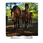 Inquisitive Horses Shower Curtain