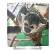 Inquisitive Monkey Shower Curtain