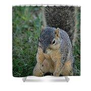 Inquisitive Squirrel Shower Curtain