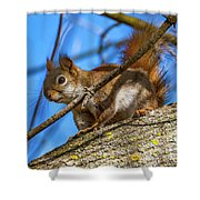 Inquisitive Squirrel Shower Curtain