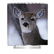 Inquisitive Yearling Shower Curtain