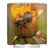 Insect - Bee - Dare To Bee Different Shower Curtain