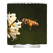 Insect - Bee - Honey I'm Home Shower Curtain