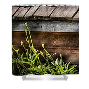 Insect - Spider - Charlottes Web Shower Curtain by Mike Savad