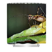 Insect And Morning Dew Shower Curtain
