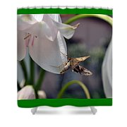 Insect In Flower Shower Curtain