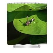 Insect On Lotus Leaf Shower Curtain