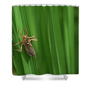 Insect Stain On The Leaf Shower Curtain