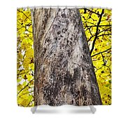 Insect Writing Shower Curtain