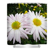 Inseparables Daisies Shower Curtain