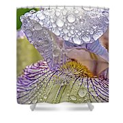 Inside A Bearded Iris Shower Curtain