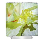 Inside Beauty Shower Curtain