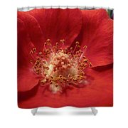 Inside The Rose Shower Curtain